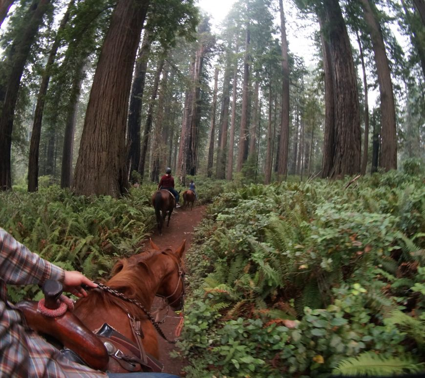 Redwood Trails Horse Rides, horseback riding in the Redwood National Park near Orick California