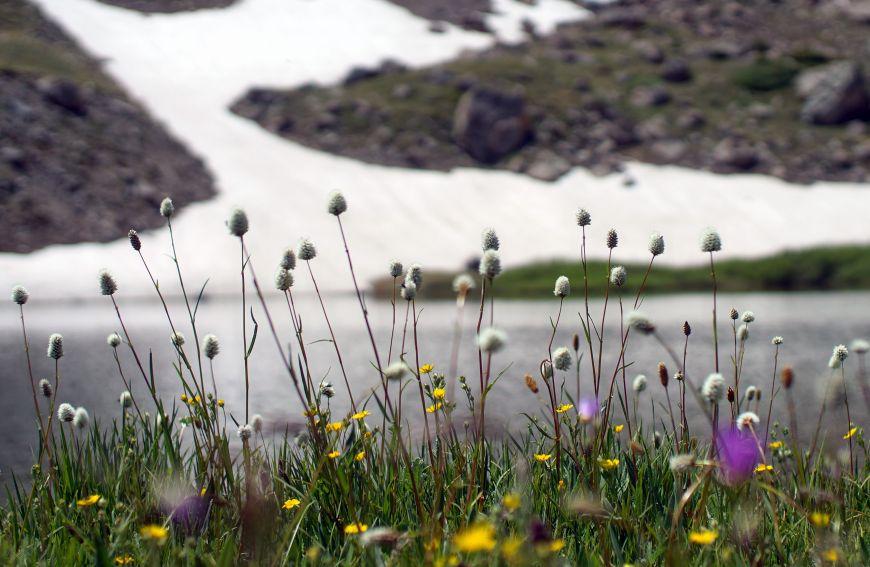 Modeno Lake wild flowers